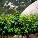 mountain vineyards rock outcropping hawk watch
