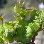hawk watch vineyards warner springs