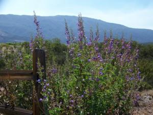 desert wild flowers wine tasting